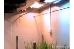 人工补光型气候室