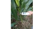 SY-S031植物抗倒伏威廉希尔手机版